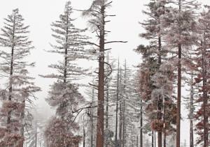 forest slider